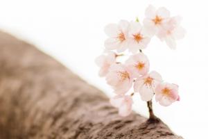 【薬膳ヨガ #4】「瞑想しよう!/夜に会いましょう」(2020/4/4号)
